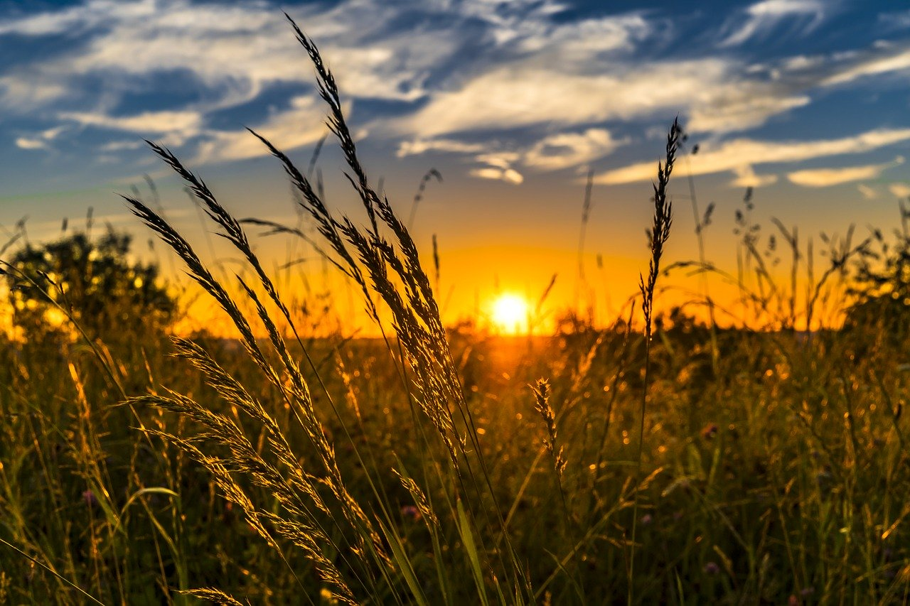 Fotowoltaika dla rolnictwa - na czym polega i czy to ma sens?